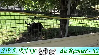 S.P.A Refuge du Ramier - Montauban.